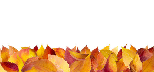 Colorful autumn leaves lying down on the ground