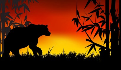 beauty silhouette of panda with bamboo background