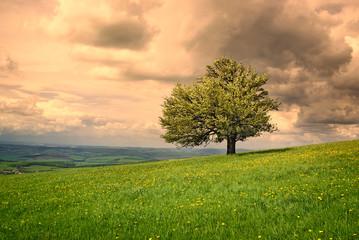 Nature, tree cloud sky