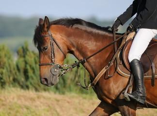 cheval et jambe de cavalière