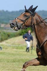 cheval au dessus de la main