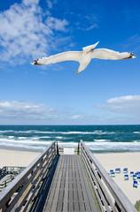 Möwe fliegt über Holzsteg am Strand an der Küste