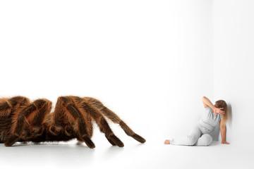Spinnenangst - Arachnophobie