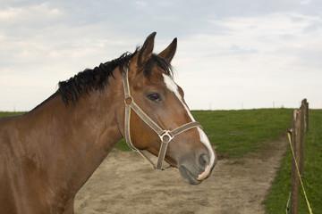 koń spogląda przez płot