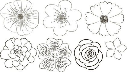 Flowers collection. Elements for design.