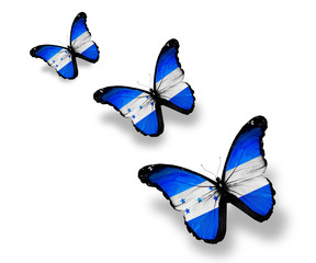 Three Honduras flag butterflies, isolated on white