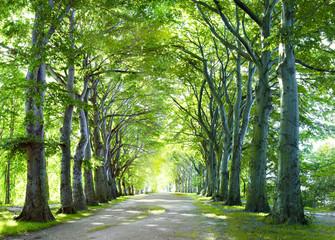 Fototapeta the way in forest