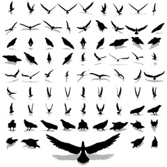 High resolution collection of black eagle silhouette isolated