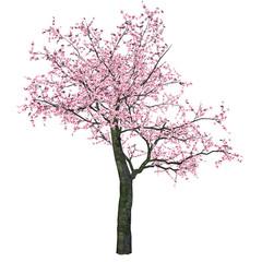 Pink Cherry Tree (Sakura)