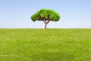 campo de hierba y árbol