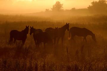 Konie o świcie - fototapety na wymiar