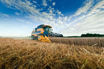 moissonneuse batteuse blé champs agriculture