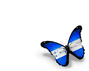 Honduras flag butterfly, isolated on white background