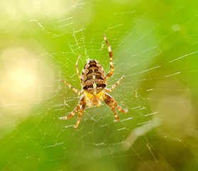 Macro shot of small spider.
