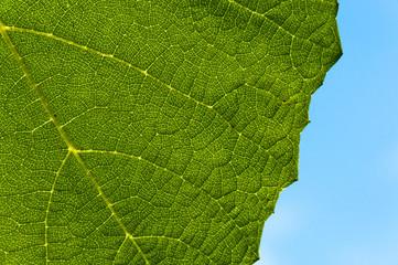 Grape leaf textured part back
