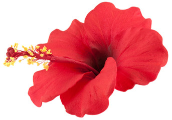 Hibiscus Photos Royalty Free Images Graphics Vectors Videos