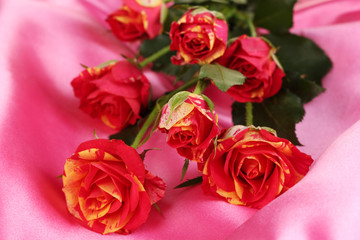 Beautiful red-yellow roses on pink satin close-up
