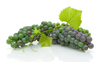 young clusters of grapes with leaves on white background