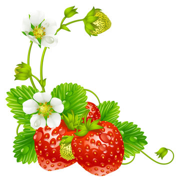 Vector strawberry frame isolated on background