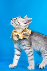 kitten with a bow