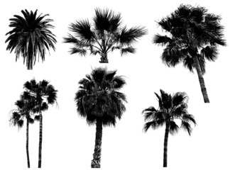palms trees silhouette collection