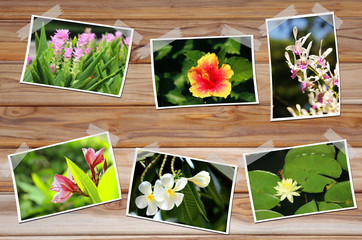 photos of flowers on wooden wall