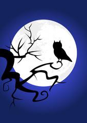 Hibou lune