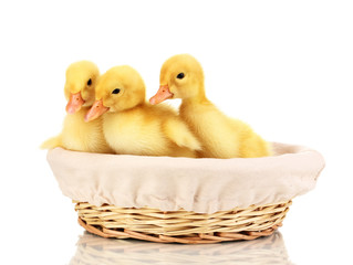 Three duckling in basket isolated on white