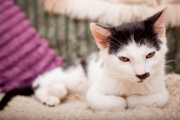 Young kitty with a funny mustache