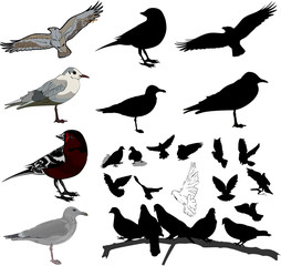 Set of birds and silhouettes of birds