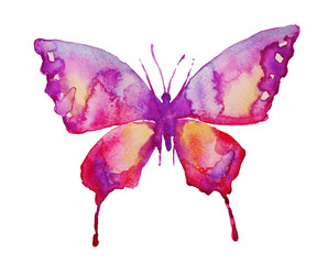 butterfly,water-colou