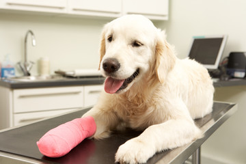 Dog Recovering After Treatment On Table In Veterinary Surgery