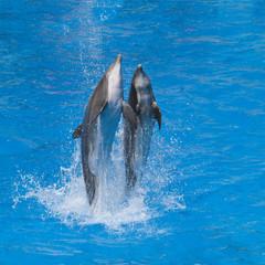 Fototapeten Delfine Dauphine dansant sur l'eau