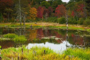 Fall colors in Maine, Mount Desert Island, Maine, USA