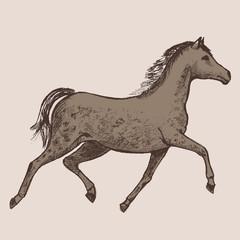 Art picture horses