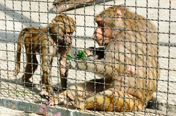 Two monkeys in a cage