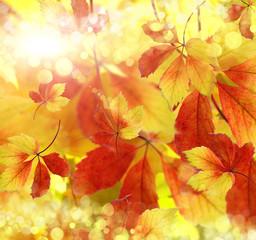 autumn, background