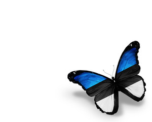 Estonian flag butterfly, isolated on white background