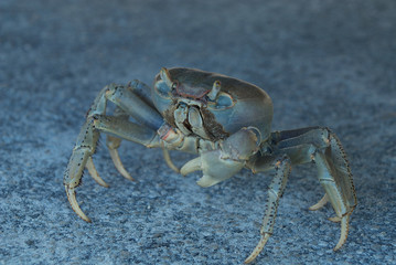 Land Crab in the shadow of a truck