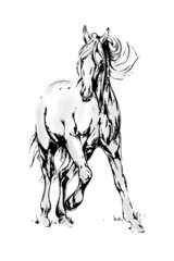 Horse black white move light art