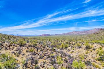 beautiful mountain desert landscape with cacti