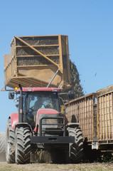 サトウキビ 収穫作業の様子