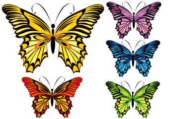 Set butterflies isolated on a white background