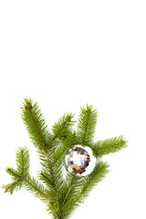 xmas tree ball hanging on a Christmas tree branch, isolated