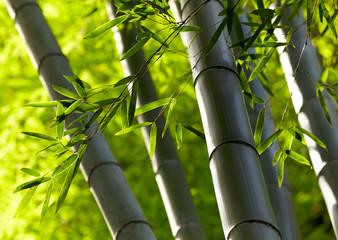 Photo sur Plexiglas Bamboo Bamboo forest background. Shallow DOF