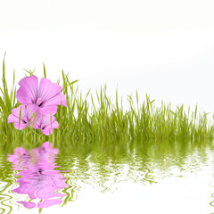 Green grass with beautyful flowers reflecting in water