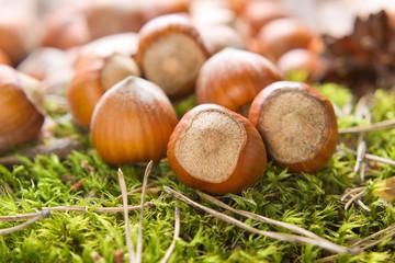 Hazelnuts (filbert) on the moss
