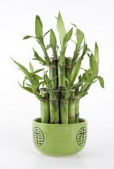 Macro Bamboo