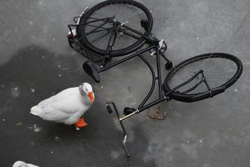 Papera e Bicicletta