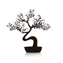 Black bonsai tree